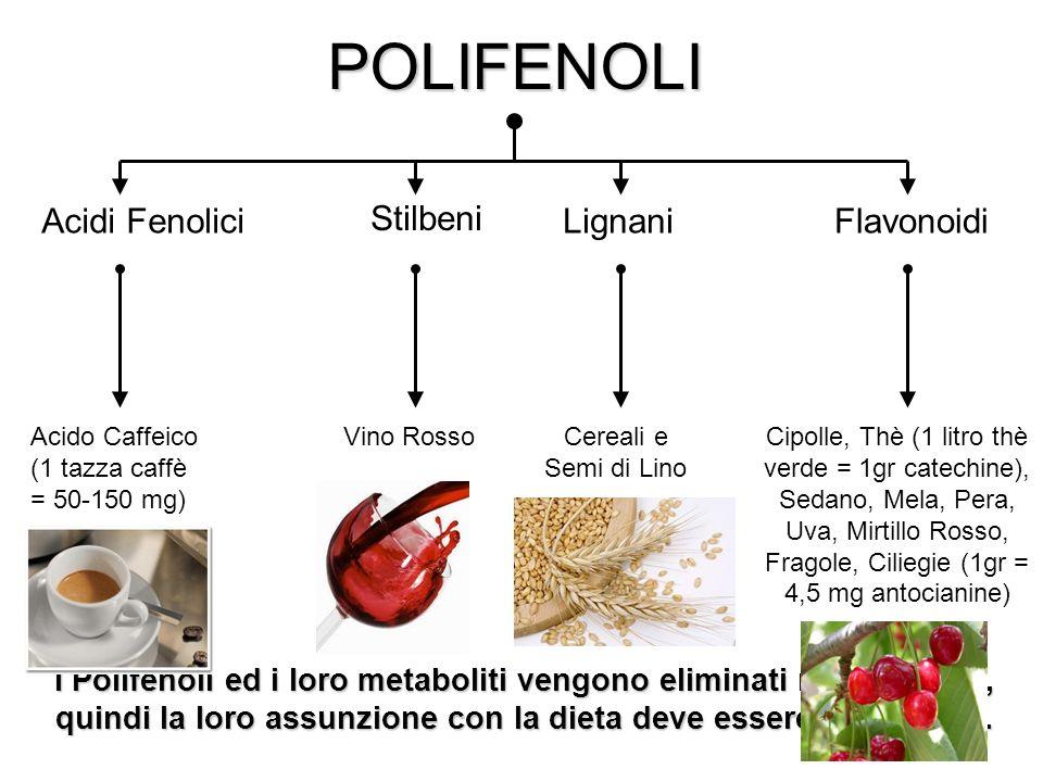 6POLIFENOLI Flavonoidi Acidi FenoliciLignani Stilbeni Acido Caffeico (1 tazza caffè = 50-150 mg) Vino RossoCereali e Semi di Lino Cipolle, Thè (1 litro thè verde = 1gr catechine), Sedano, Mela, Pera, Uva, Mirtillo Rosso, Fragole, Ciliegie (1gr = 4,5 mg antocianine) I Polifenoli ed i loro metaboliti vengono eliminati rapidamente, quindi la loro assunzione con la dieta deve essere giornaliera.