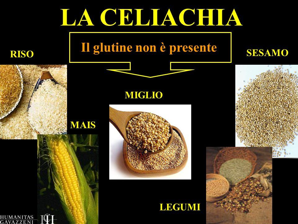 LA CELIACHIA Il glutine non è presente RISO MAIS MIGLIO LEGUMI SESAMO