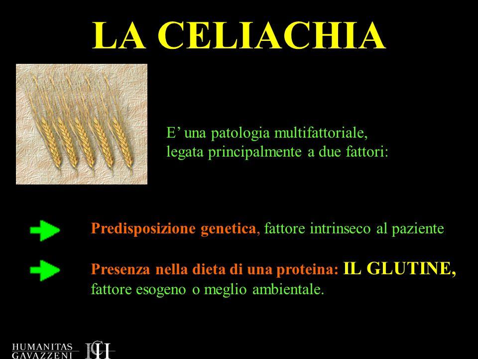 LA CELIACHIA E una patologia multifattoriale, legata principalmente a due fattori: Predisposizione genetica, fattore intrinseco al paziente Presenza n