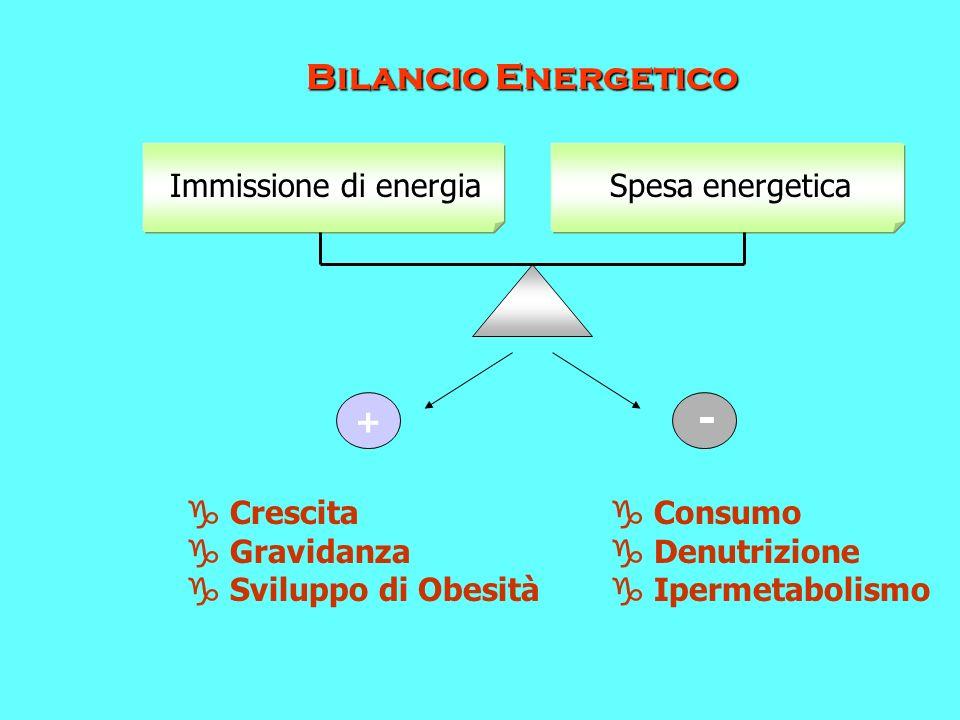 Spesa energeticaImmissione di energia Bilancio Energetico + - Crescita Gravidanza Sviluppo di Obesità Consumo Denutrizione Ipermetabolismo