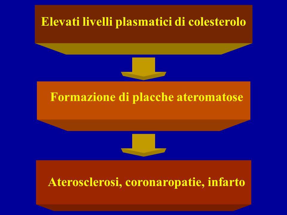 Elevati livelli plasmatici di colesterolo Formazione di placche ateromatose Aterosclerosi, coronaropatie, infarto