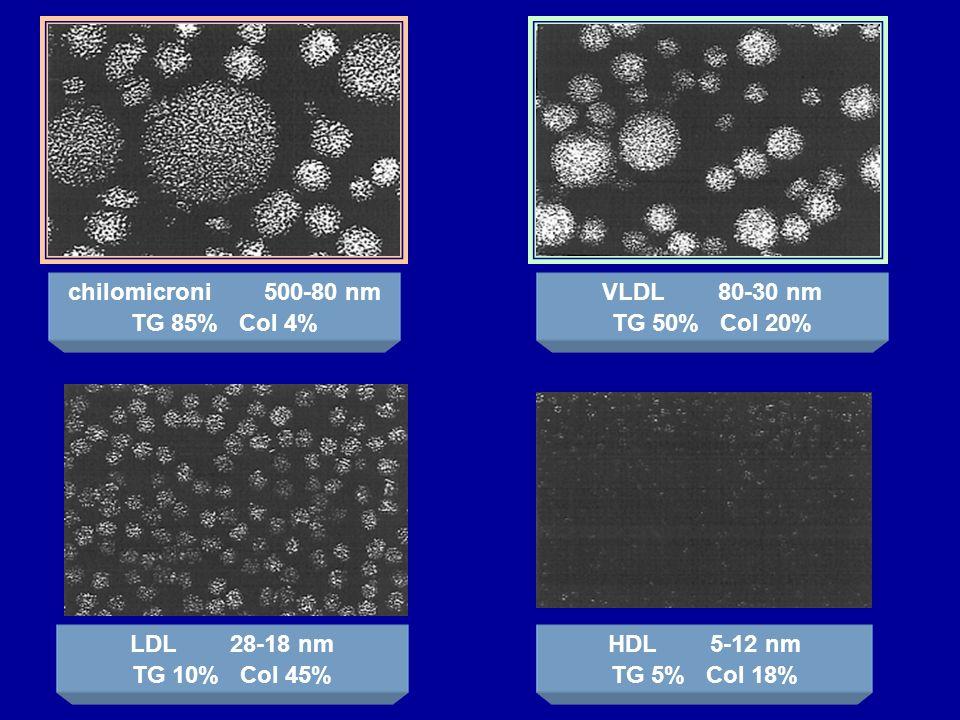 chilomicroni 500-80 nm TG 85% Col 4% VLDL 80-30 nm TG 50% Col 20% LDL 28-18 nm TG 10% Col 45% HDL 5-12 nm TG 5% Col 18%
