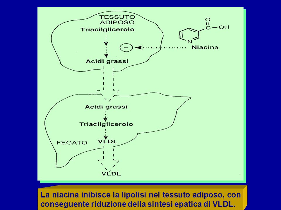 La niacina inibisce la lipolisi nel tessuto adiposo, con conseguente riduzione della sintesi epatica di VLDL.