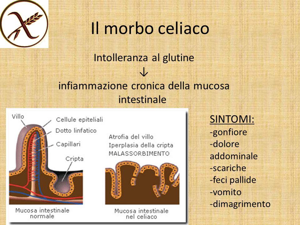 Il morbo celiaco Intolleranza al glutine infiammazione cronica della mucosa intestinale SINTOMI: -gonfiore -dolore addominale -scariche -feci pallide