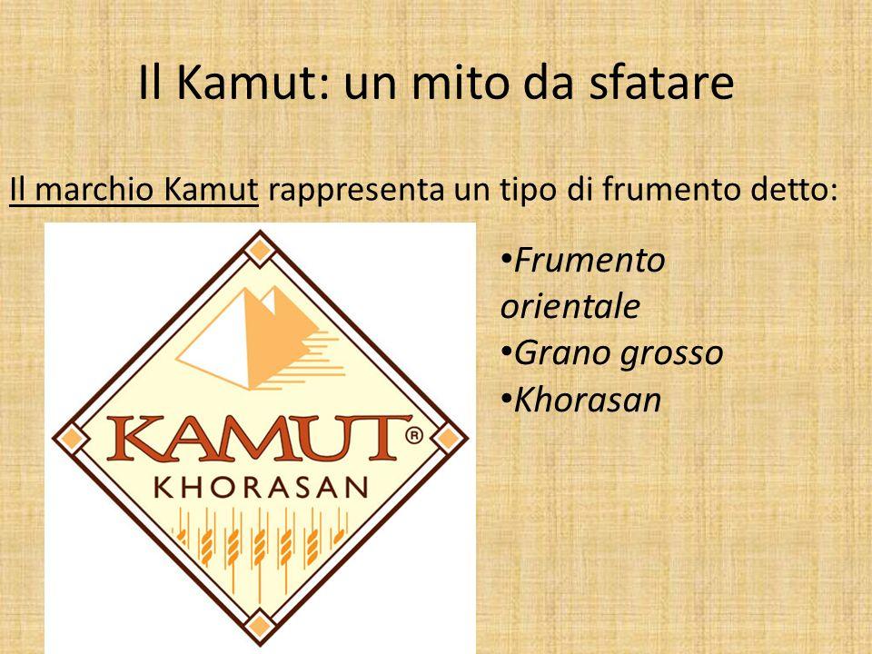 Il Kamut: un mito da sfatare Frumento orientale Grano grosso Khorasan Il marchio Kamut rappresenta un tipo di frumento detto: