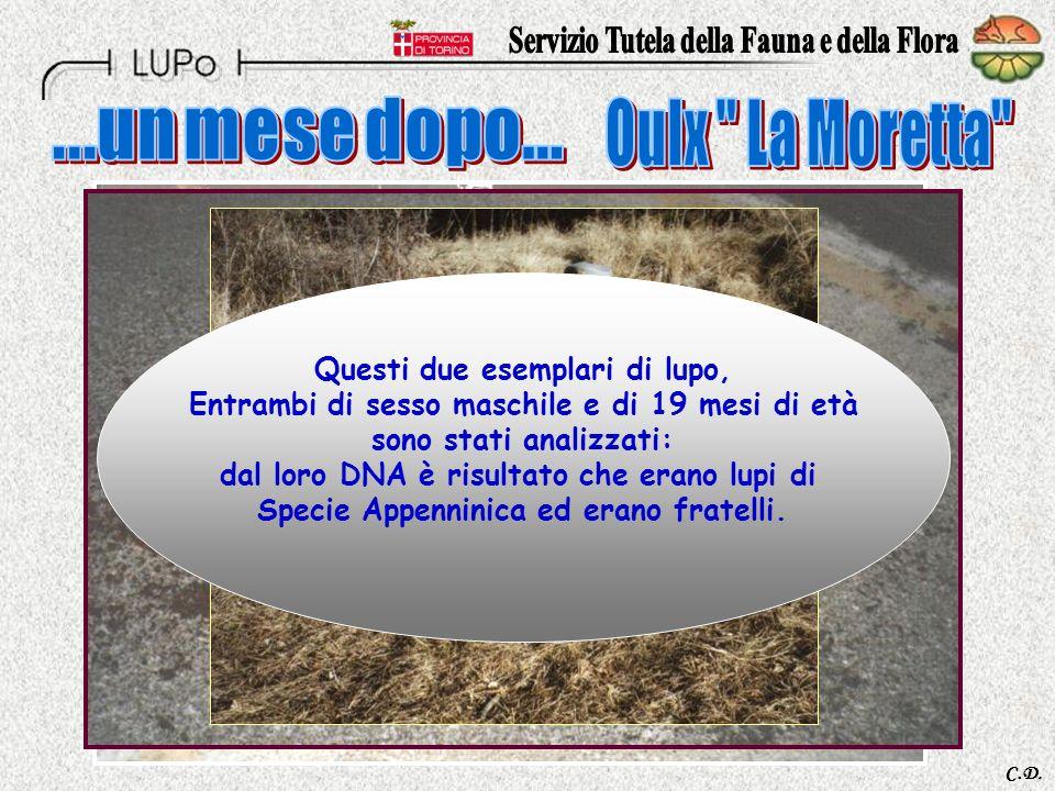 Presso la Facoltà di Medicina Veterinaria dellUniversità di Torino, sede di Grugliasco.