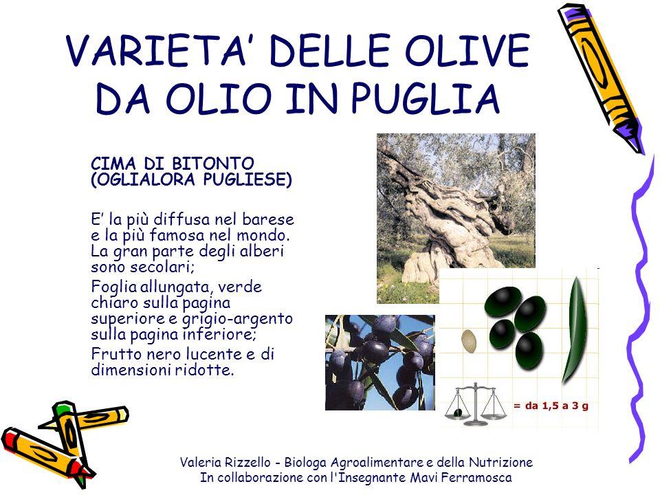 Valeria Rizzello - Biologa Agroalimentare e della Nutrizione In collaborazione con l'Insegnante Mavi Ferramosca VARIETA DELLE OLIVE DA OLIO IN PUGLIA