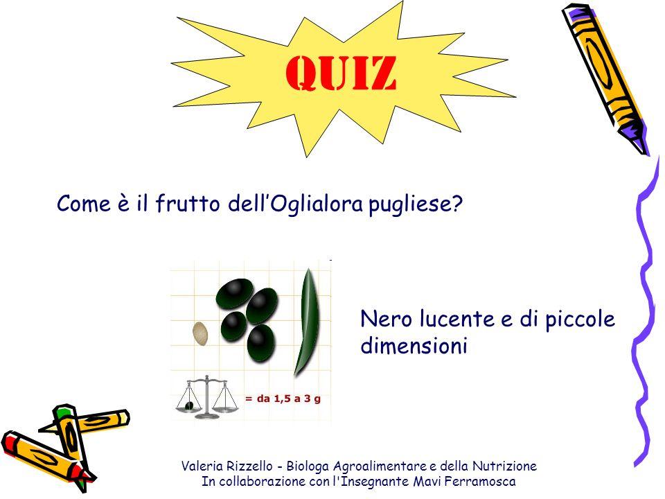 Valeria Rizzello - Biologa Agroalimentare e della Nutrizione In collaborazione con l'Insegnante Mavi Ferramosca QUIZ Come è il frutto dellOglialora pu