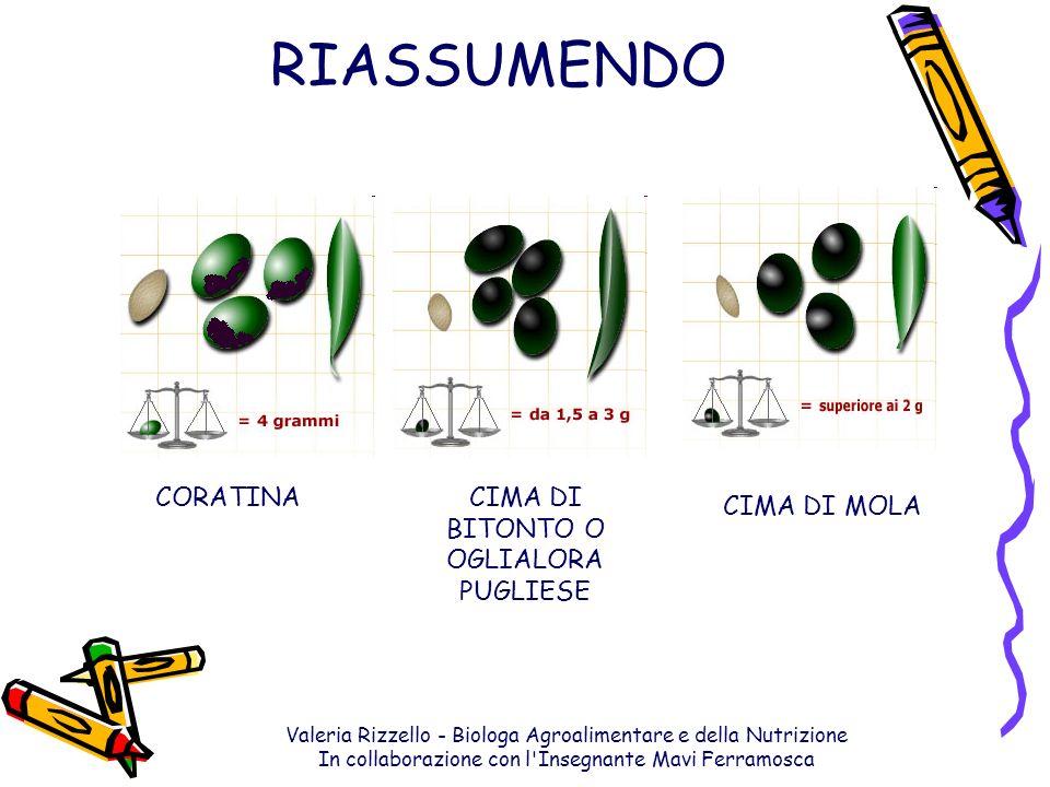 Valeria Rizzello - Biologa Agroalimentare e della Nutrizione In collaborazione con l'Insegnante Mavi Ferramosca RIASSUMENDO CORATINACIMA DI BITONTO O