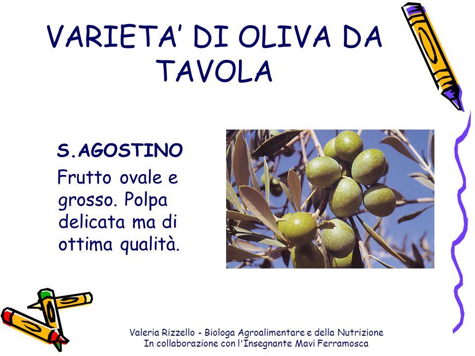 Valeria Rizzello - Biologa Agroalimentare e della Nutrizione In collaborazione con l'Insegnante Mavi Ferramosca VARIETA DI OLIVA DA TAVOLA S.AGOSTINO