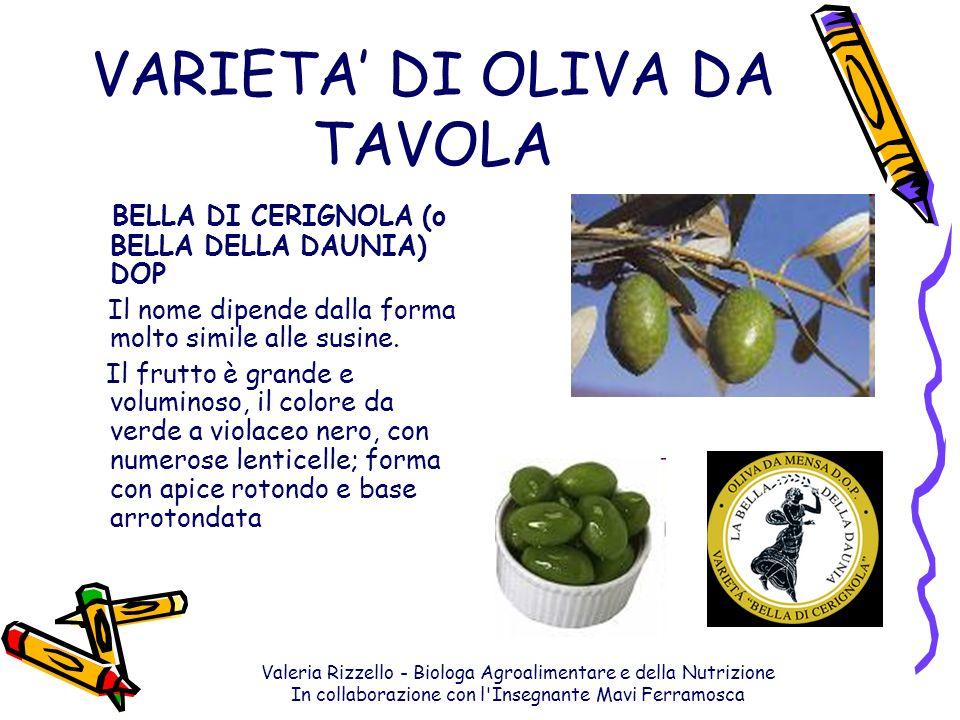 Valeria Rizzello - Biologa Agroalimentare e della Nutrizione In collaborazione con l'Insegnante Mavi Ferramosca VARIETA DI OLIVA DA TAVOLA BELLA DI CE