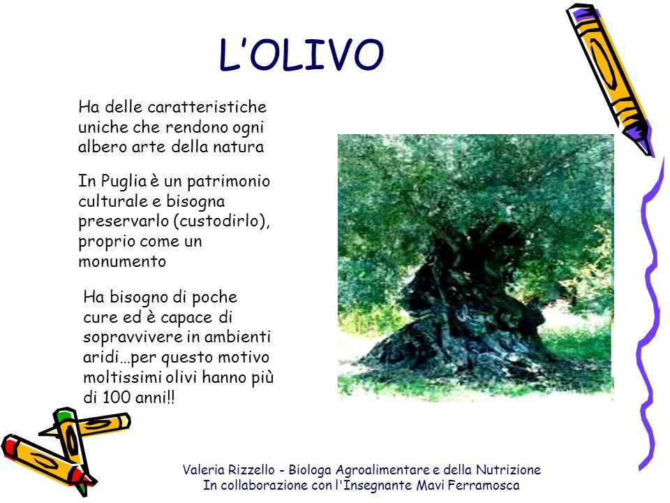 Valeria Rizzello - Biologa Agroalimentare e della Nutrizione In collaborazione con l'Insegnante Mavi Ferramosca LOLIVO Ha delle caratteristiche uniche