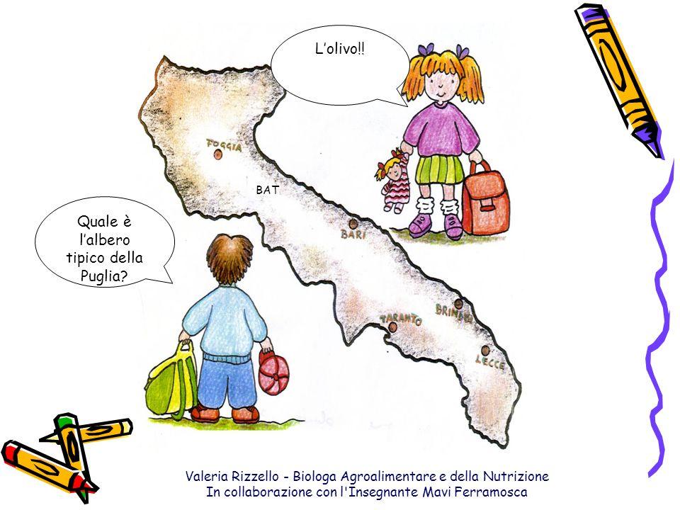 Valeria Rizzello - Biologa Agroalimentare e della Nutrizione In collaborazione con l'Insegnante Mavi Ferramosca BAT Lolivo!! Quale è lalbero tipico de