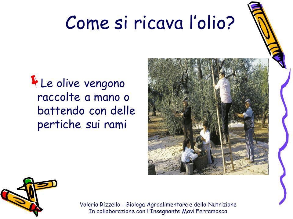 Valeria Rizzello - Biologa Agroalimentare e della Nutrizione In collaborazione con l'Insegnante Mavi Ferramosca Come si ricava lolio? Le olive vengono