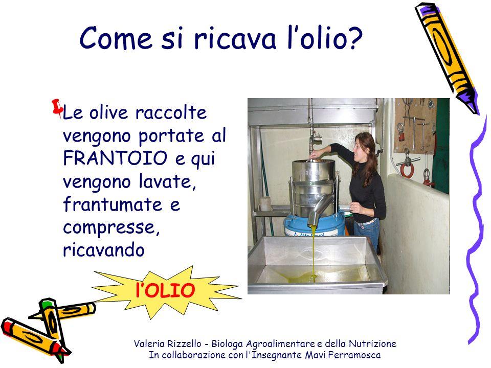 Valeria Rizzello - Biologa Agroalimentare e della Nutrizione In collaborazione con l'Insegnante Mavi Ferramosca Come si ricava lolio? Le olive raccolt