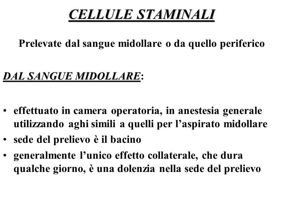 CELLULE STAMINALI Prelevate dal sangue midollare o da quello periferico DAL SANGUE MIDOLLARE DAL SANGUE MIDOLLARE: effettuato in camera operatoria, in