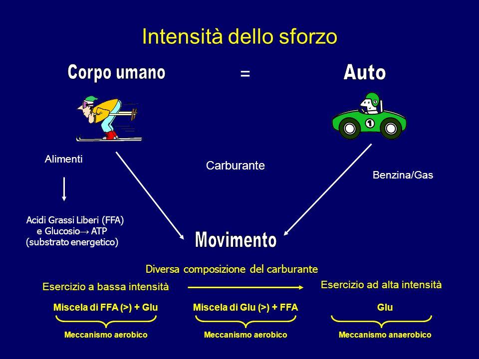 Intensità dello sforzo = Alimenti Acidi Grassi Liberi (FFA) e Glucosio ATP (substrato energetico) Benzina/Gas Esercizio a bassa intensità Esercizio ad alta intensità Miscela di FFA (>) + GluMiscela di Glu (>) + FFAGlu Meccanismo aerobico Meccanismo anaerobico Carburante Diversa composizione del carburante