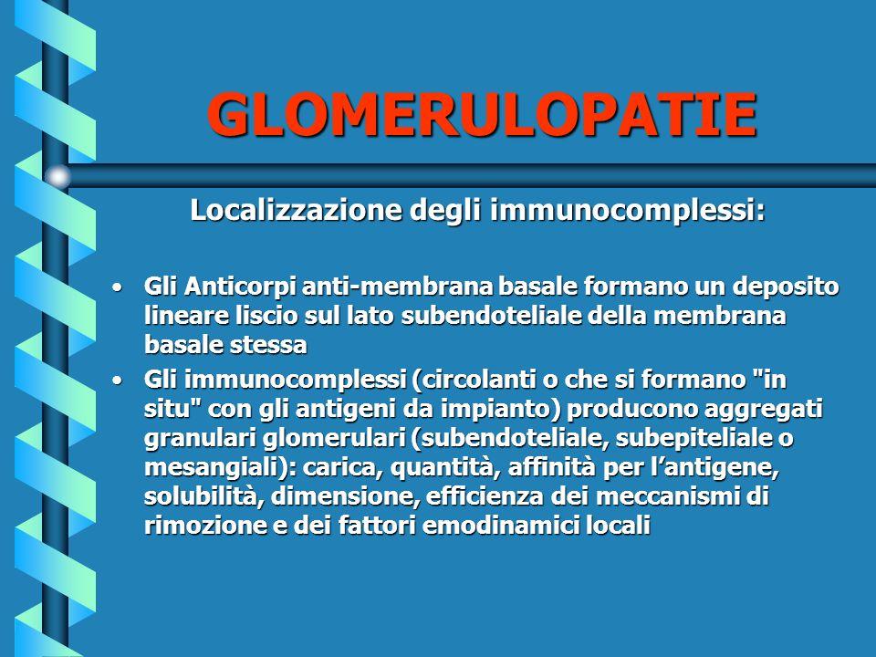 Localizzazione degli immunocomplessi: Gli Anticorpi anti-membrana basale formano un deposito lineare liscio sul lato subendoteliale della membrana bas