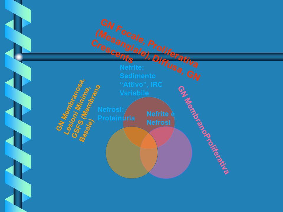 GN Focale, Proliferativa (Mesangiale), Diffusa, GN Crescents GN Membranosa, Lesioni Minime, GSFS (Membrana Basale) GN MembranoProliferativa Nefrite: S
