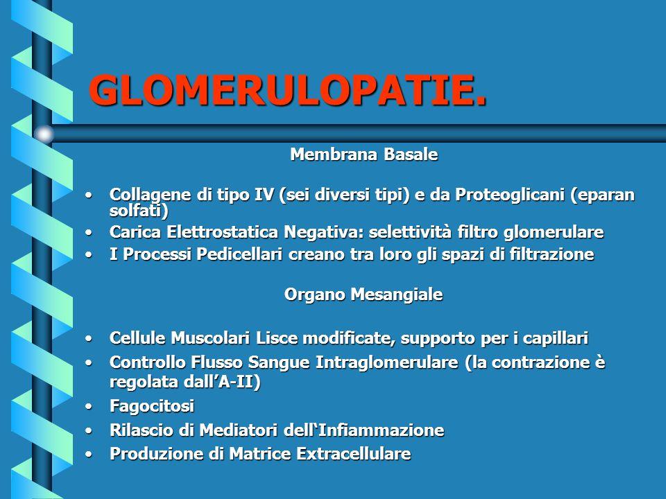GLOMERULOPATIE. Membrana Basale Collagene di tipo IV (sei diversi tipi) e da Proteoglicani (eparan solfati)Collagene di tipo IV (sei diversi tipi) e d