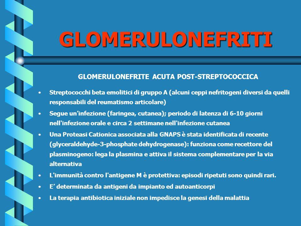 GLOMERULONEFRITE ACUTA POST-STREPTOCOCCICA Streptococchi beta emolitici di gruppo A (alcuni ceppi nefritogeni diversi da quelli responsabili del reuma