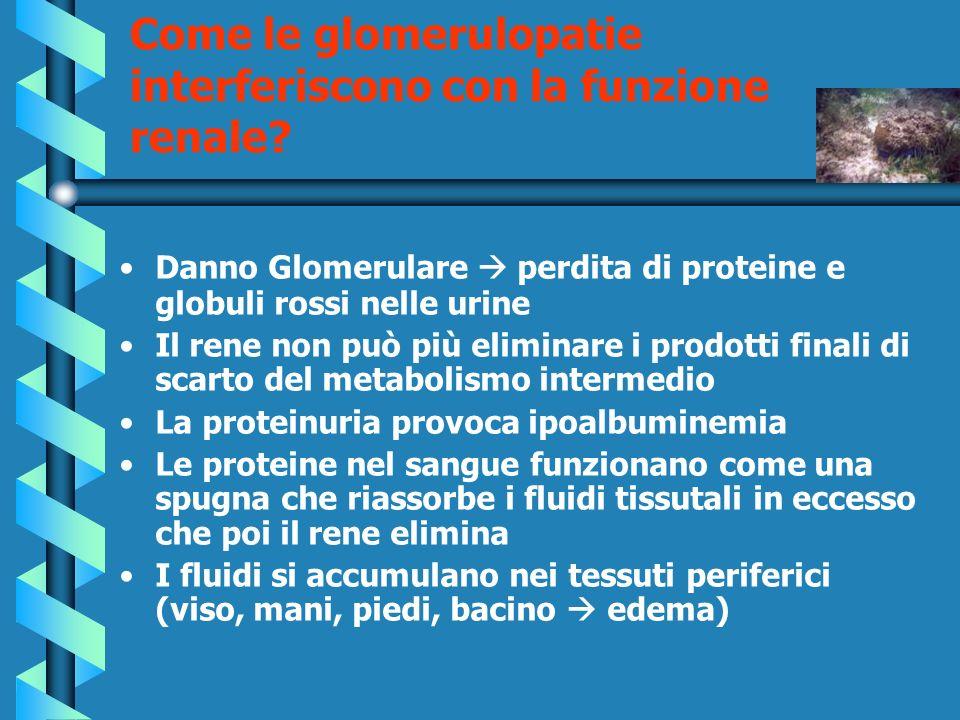 Come le glomerulopatie interferiscono con la funzione renale? Danno Glomerulare perdita di proteine e globuli rossi nelle urine Il rene non può più el