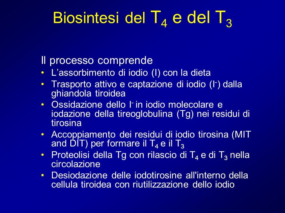 Biosintesi del T 4 e del T 3 Il processo comprende Lassorbimento di iodio (I) con la dieta Trasporto attivo e captazione di iodio (I - ) dalla ghiando