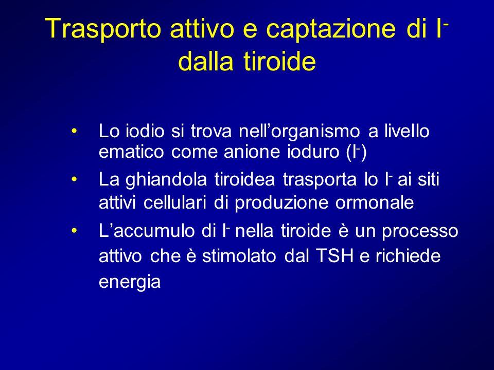 Trasporto attivo e captazione di I - dalla tiroide Lo iodio si trova nellorganismo a livello ematico come anione ioduro (I - ) La ghiandola tiroidea t
