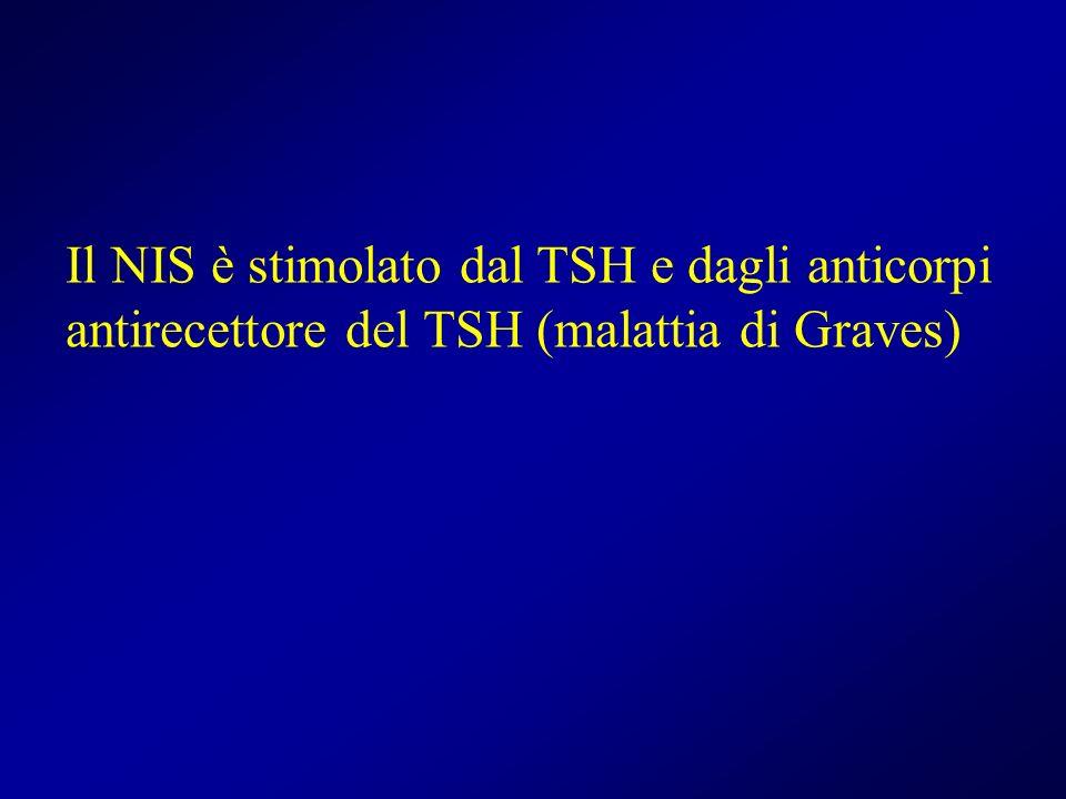 Il NIS è stimolato dal TSH e dagli anticorpi antirecettore del TSH (malattia di Graves)