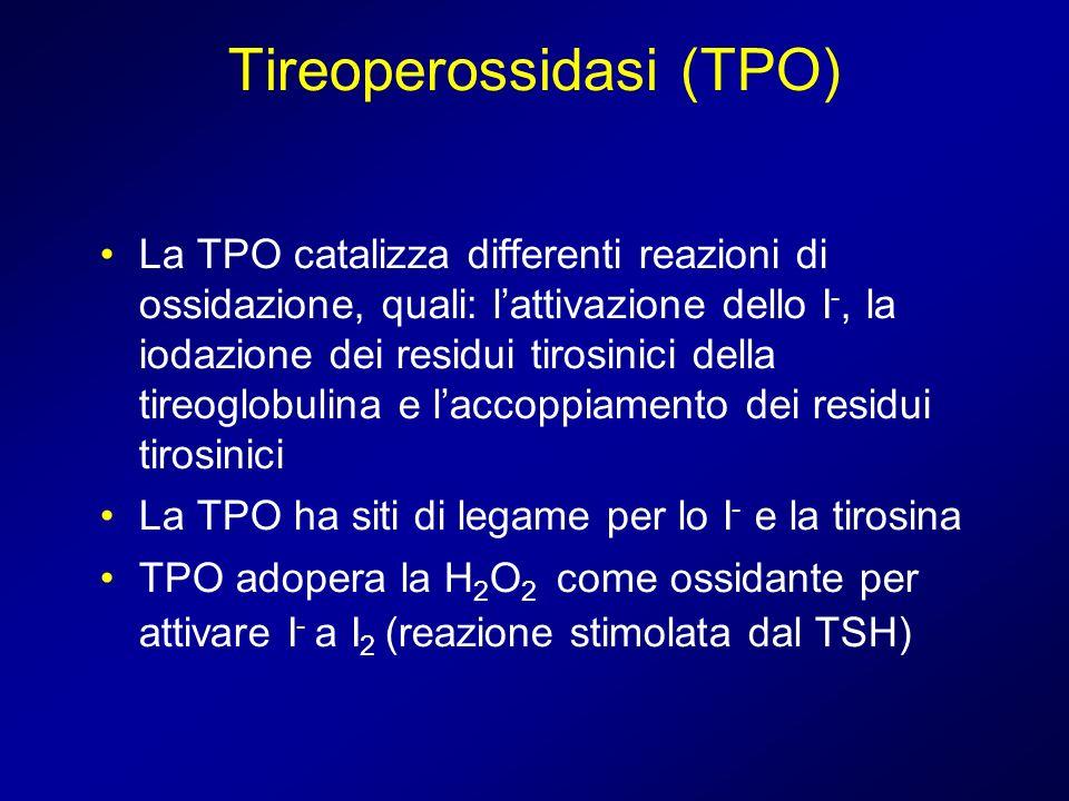 Tireoperossidasi (TPO) La TPO catalizza differenti reazioni di ossidazione, quali: lattivazione dello I -, la iodazione dei residui tirosinici della t
