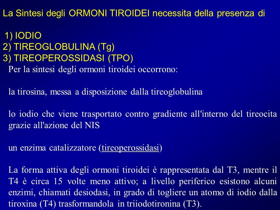La Sintesi degli ORMONI TIROIDEI necessita della presenza di 1) IODIO 2) TIREOGLOBULINA (Tg) 3) TIREOPEROSSIDASI (TPO) Per la sintesi degli ormoni tir
