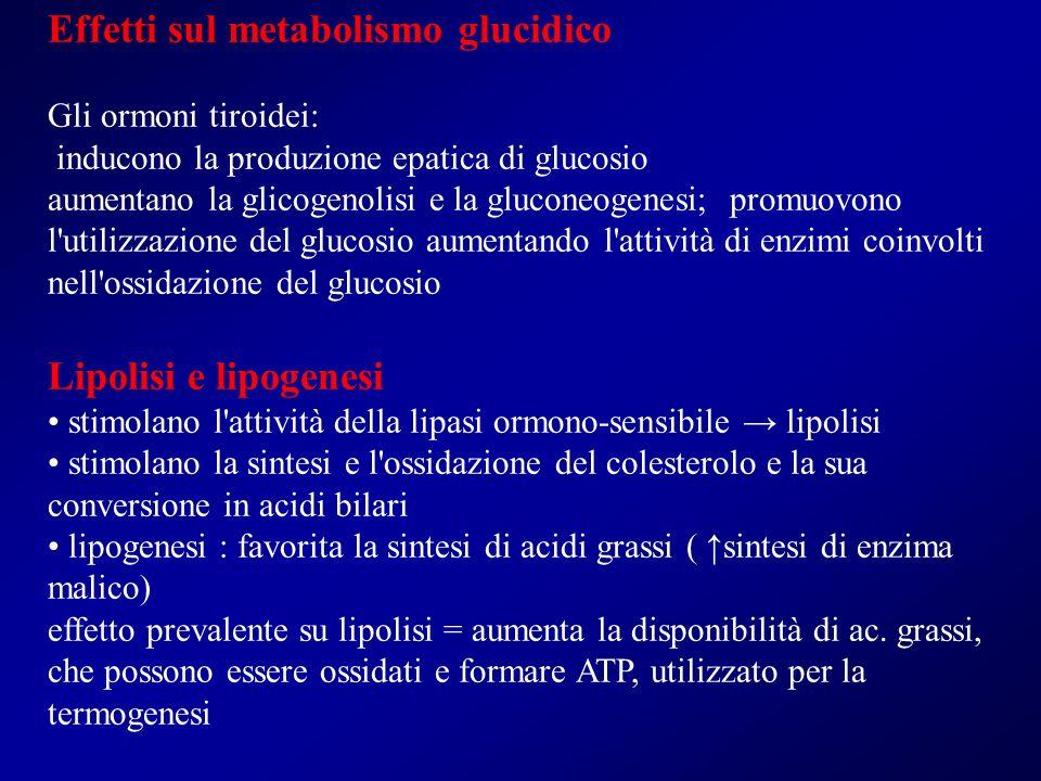 Effetti sul metabolismo glucidico Gli ormoni tiroidei: inducono la produzione epatica di glucosio aumentano la glicogenolisi e la gluconeogenesi; prom