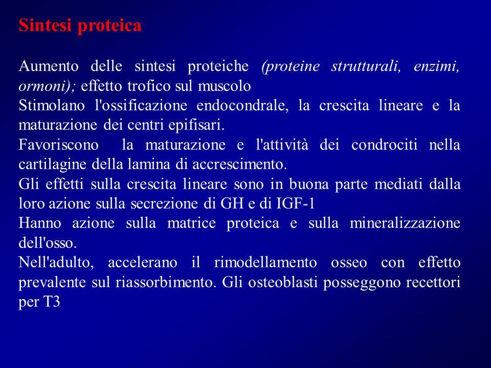 Sintesi proteica Aumento delle sintesi proteiche (proteine strutturali, enzimi, ormoni); effetto trofico sul muscolo Stimolano l'ossificazione endocon