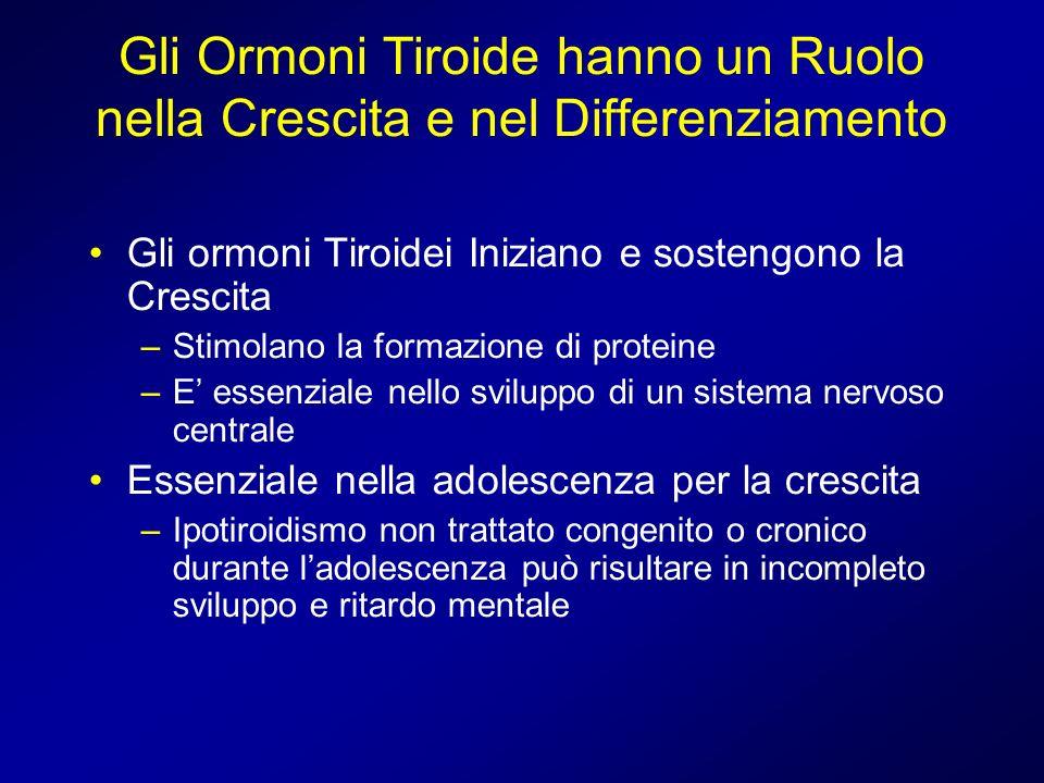 Gli Ormoni Tiroide hanno un Ruolo nella Crescita e nel Differenziamento Gli ormoni Tiroidei Iniziano e sostengono la Crescita –Stimolano la formazione