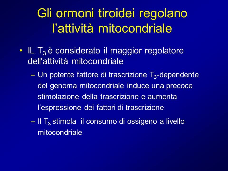 Gli ormoni tiroidei regolano lattività mitocondriale IL T 3 è considerato il maggior regolatore dellattività mitocondriale –Un potente fattore di tras