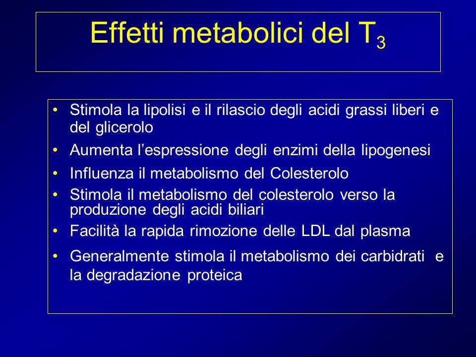 Effetti metabolici del T 3 Stimola la lipolisi e il rilascio degli acidi grassi liberi e del glicerolo Aumenta lespressione degli enzimi della lipogen
