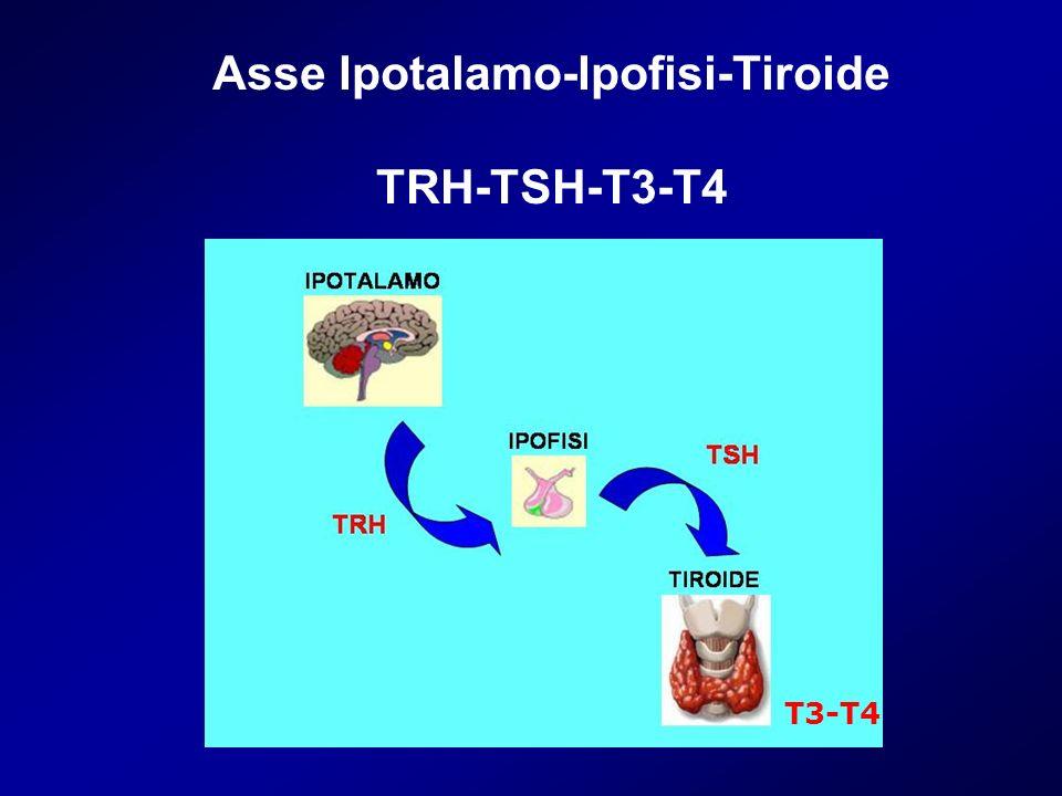 Asse Ipotalamo-Ipofisi-Tiroide TRH-TSH-T3-T4 T3-T4