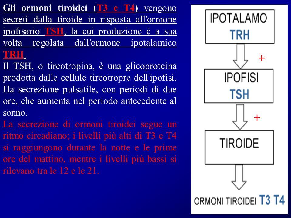 Gli ormoni tiroidei (T3 e T4) vengono secreti dalla tiroide in risposta all'ormone ipofisario TSH, la cui produzione è a sua volta regolata dall'ormon