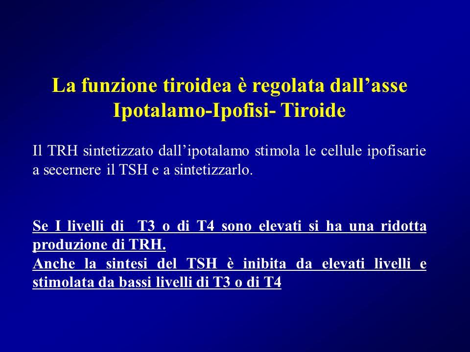 La funzione tiroidea è regolata dallasse Ipotalamo-Ipofisi- Tiroide Il TRH sintetizzato dallipotalamo stimola le cellule ipofisarie a secernere il TSH