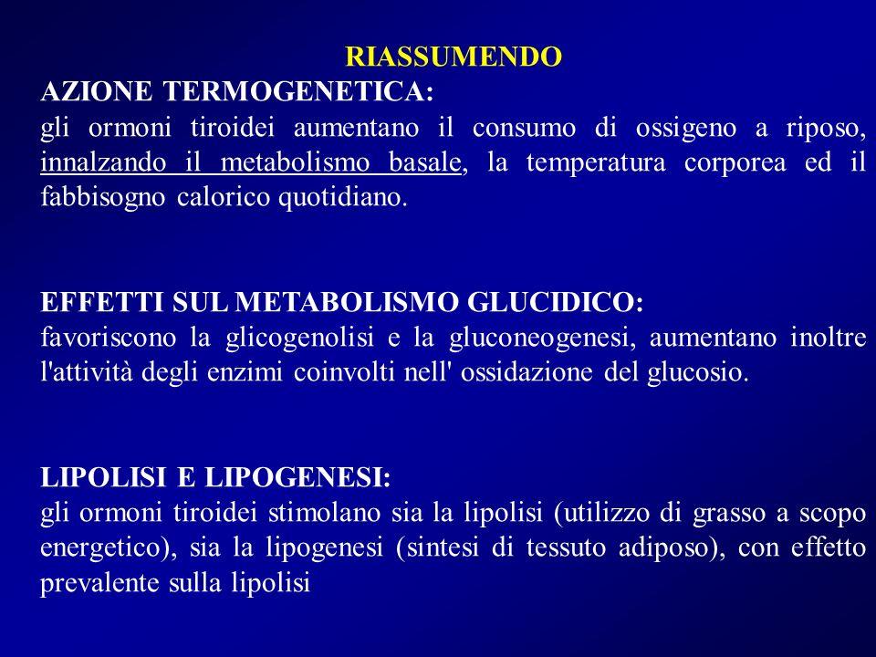 RIASSUMENDO AZIONE TERMOGENETICA: gli ormoni tiroidei aumentano il consumo di ossigeno a riposo, innalzando il metabolismo basale, la temperatura corp