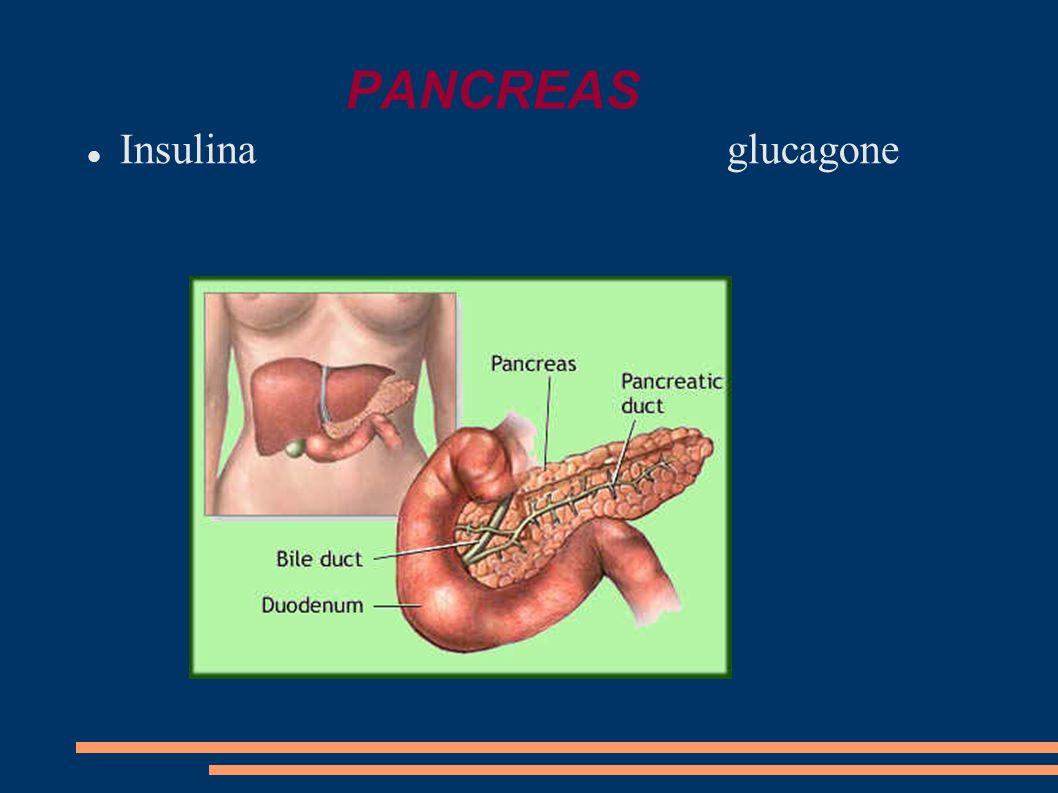 PANCREAS Insulina glucagone
