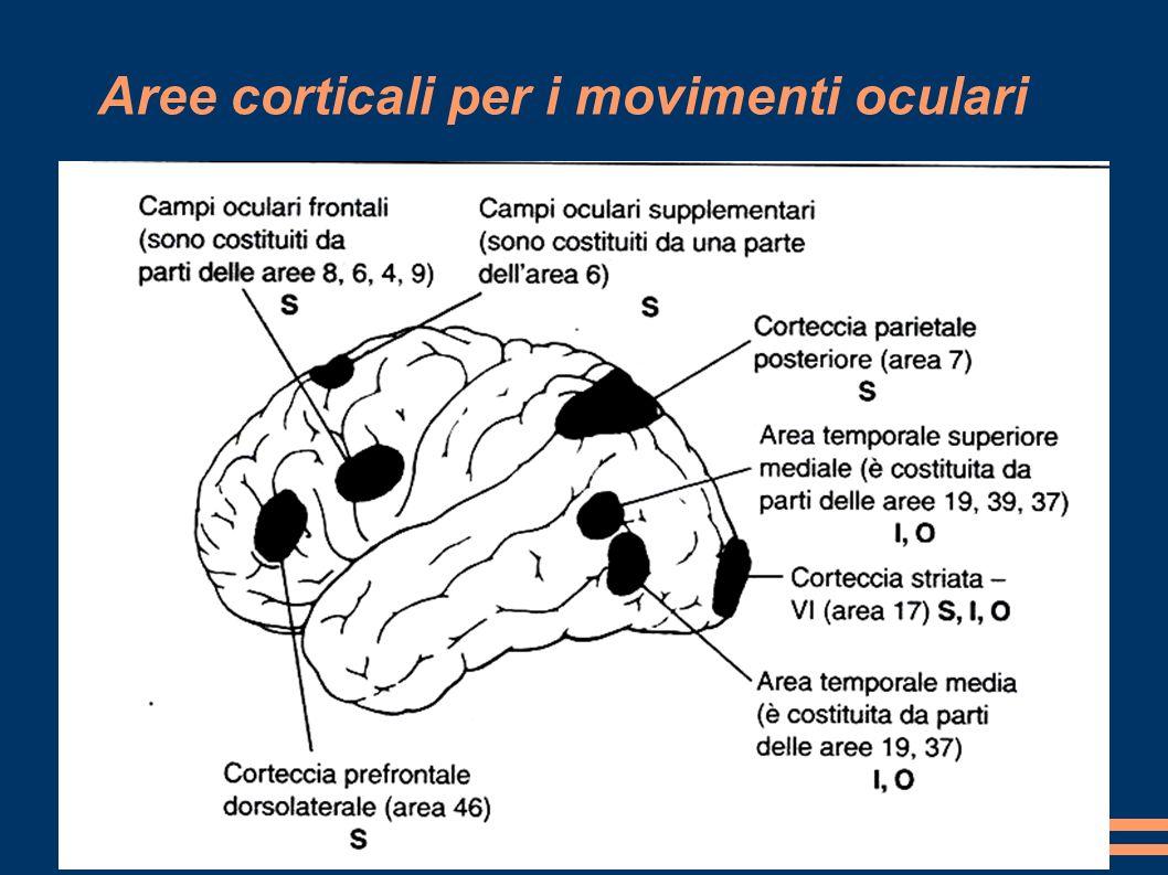Aree corticali per i movimenti oculari