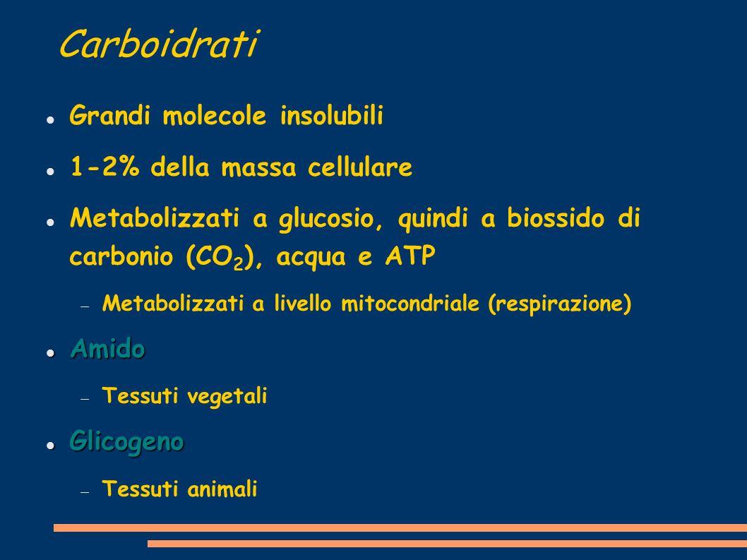 Carboidrati Grandi molecole insolubili 1-2% della massa cellulare Metabolizzati a glucosio, quindi a biossido di carbonio (CO 2 ), acqua e ATP Metabol