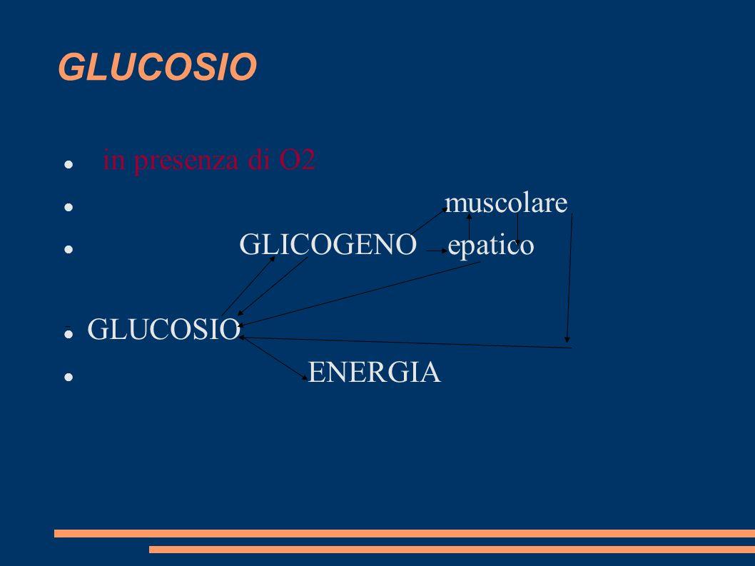 GLUCOSIO in presenza di O2 muscolare GLICOGENO epatico GLUCOSIO ENERGIA