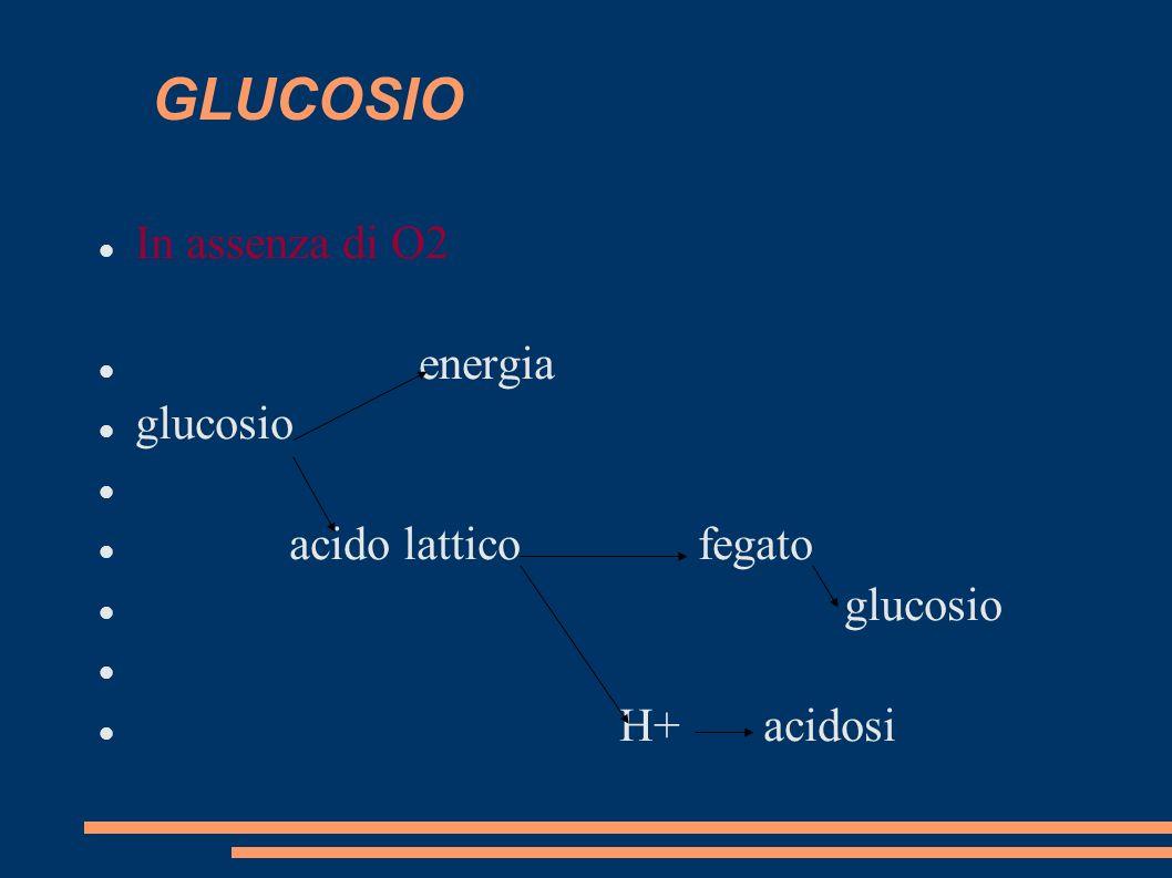 GLUCOSIO In assenza di O2 energia glucosio acido lattico fegato glucosio H+ acidosi