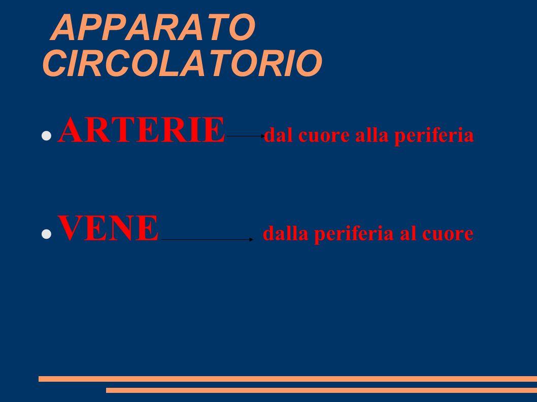 CUORE QUATTRO CAMERE CARDIACHE 2 A DS 2 SX