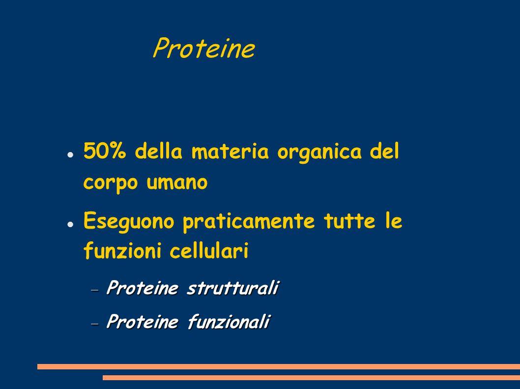 Proteine 50% della materia organica del corpo umano Eseguono praticamente tutte le funzioni cellulari Proteine strutturali Proteine strutturali Protei