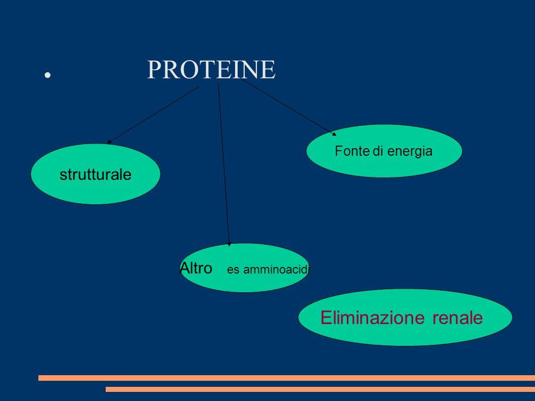 PROTEINE strutturale Fonte di energia Altro es amminoacidi Eliminazione renale