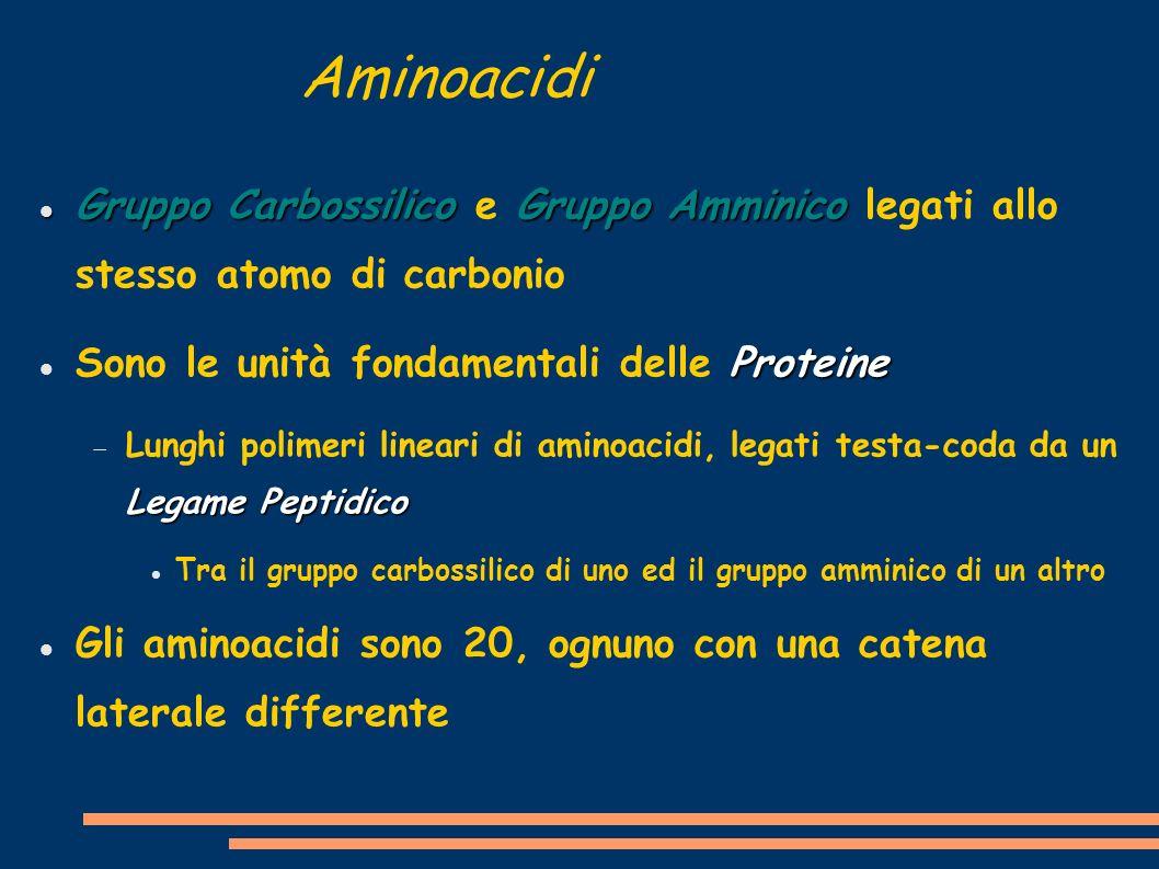 Aminoacidi Gruppo CarbossilicoGruppo Amminico Gruppo Carbossilico e Gruppo Amminico legati allo stesso atomo di carbonio Proteine Sono le unità fondam
