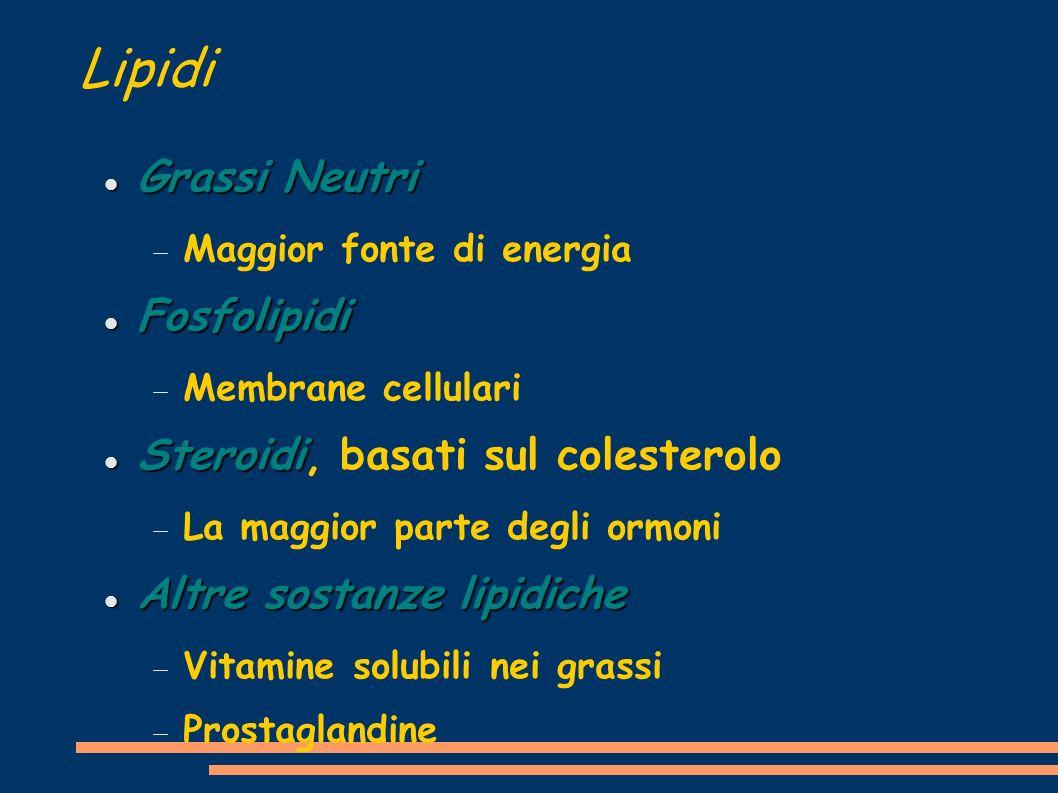Lipidi Gruppo eterogeneo di composti Essenzialmente atomi di Carbonio ed Idrogeno Biologicamente importanti sono Acidi Grassi Acidi Grassi Fosfolipidi Fosfolipidi Steroidi Steroidi